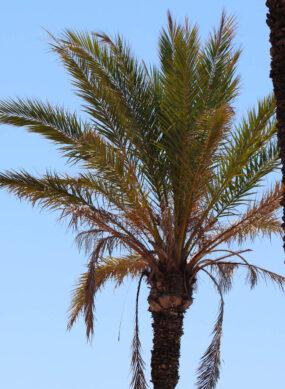 palmier et ciel
